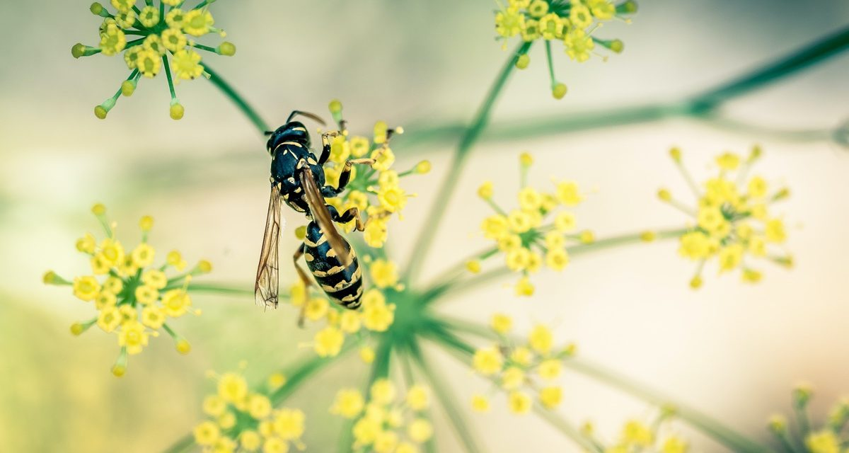 LESSONS FROM A LONE WASP